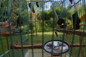 Melzer_Klich_Vogelfaenger_klein